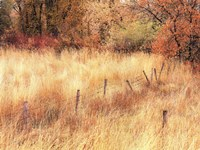 Autumn Pasture Fine-Art Print