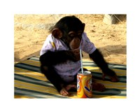 Chimp - Time for a drink Fine-Art Print