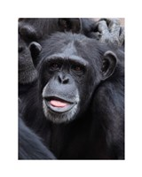 Funny face monkey Fine-Art Print