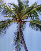 Palm on Blue Fine-Art Print