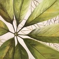 Fresh Leaves II Fine-Art Print
