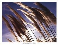 Pampas In The Wind Fine-Art Print