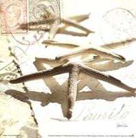 Postal Shells III Fine-Art Print