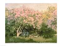 Lilac in the Sun, 1873 Fine-Art Print