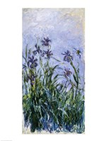 Purple Irises, 1914-17 Fine-Art Print