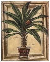 Potted Palm II Fine-Art Print
