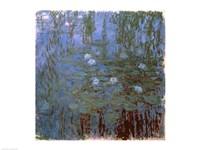 Blue Nympheas Fine-Art Print