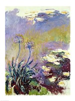 The Agapanthus, 1914-17 Fine-Art Print