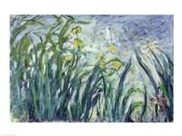 Yellow and Purple Irises, 1924-25 Fine-Art Print