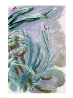 Iris (gray) Fine-Art Print