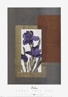 Regal Iris 1 Fine-Art Print