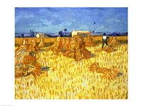 Harvest in Provence Fine-Art Print