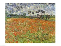 Field of Poppies Fine-Art Print