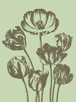 Tulip 11 Fine-Art Print