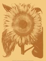 Sunflower 19 Fine-Art Print