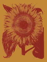 Sunflower 15 Fine-Art Print