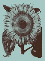 Sunflower 18 Fine-Art Print