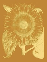 Sunflower 20 Fine-Art Print