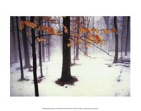 Quiet Woods Fine-Art Print