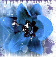 Tulip Fresco (blue) Fine-Art Print