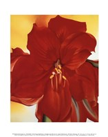 Red Amaryllis, 1937 Fine-Art Print