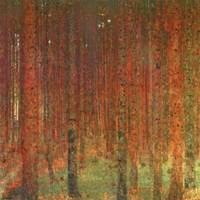 Tannenwald II Fine-Art Print