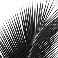 Palms 14 (detail) Fine-Art Print