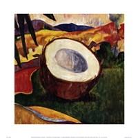 Coconut Fine-Art Print