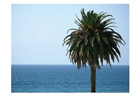 Palm at Moonlight Beach Fine-Art Print