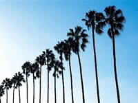 La Jolla Palms Fine-Art Print