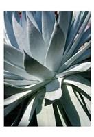 Cactus 1 Fine-Art Print