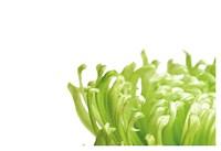 Green Bloom 1 Fine-Art Print