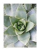 Cactus 3 Fine-Art Print
