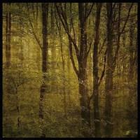 Fog in Mountain Trees No. 2 Fine-Art Print
