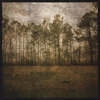 A Line of Pines Fine-Art Print