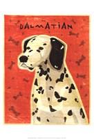 Dalmation Fine-Art Print