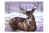 Through My Window- Whitetail Deer Fine-Art Print