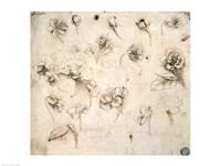 Study of the Flowers of Grass-like Plants Fine-Art Print