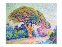 The Pine Tree at St. Tropez, 1909 Fine-Art Print