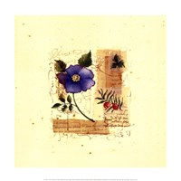Flower Notes with Blue Poppy Fine-Art Print