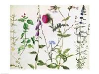 Eight Studies of Wild Flowers Fine-Art Print