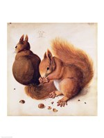 Squirrels, 1512 Fine-Art Print