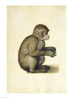 A Monkey Fine-Art Print