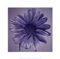 Oceana Flora IV Fine-Art Print