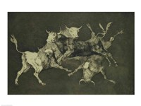 Folly of the Bulls, from the Follies series Fine-Art Print