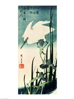 White Heron and Iris Fine-Art Print