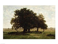 Holm Oaks, Apremont Fine-Art Print