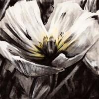 Light & Shadow Fine-Art Print