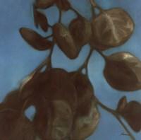 Eucalyptus I Fine-Art Print