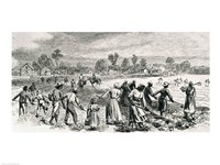 Labour in the Cotton Fields, Hoeing the Young Plants Fine-Art Print